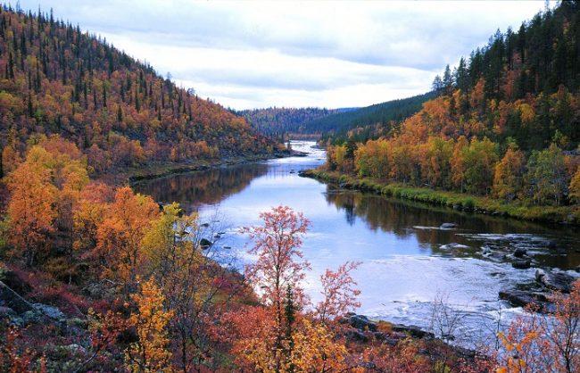Colores de otoño en Laponia-Kakslauttanen