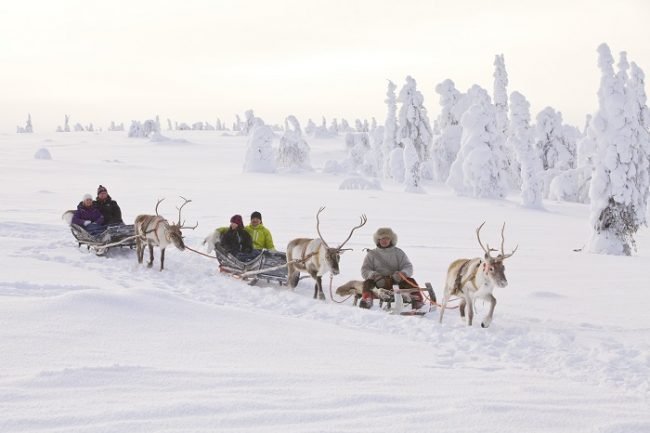 Excursión con renos en Laponia